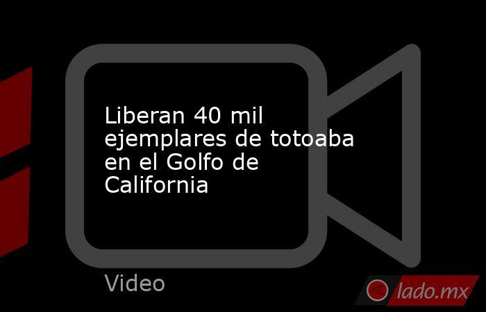 Liberan 40 mil ejemplares de totoaba en el Golfo de California. Noticias en tiempo real