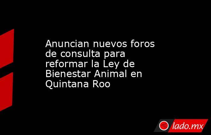 Anuncian nuevos foros de consulta para reformar la Ley de Bienestar Animal en Quintana Roo. Noticias en tiempo real