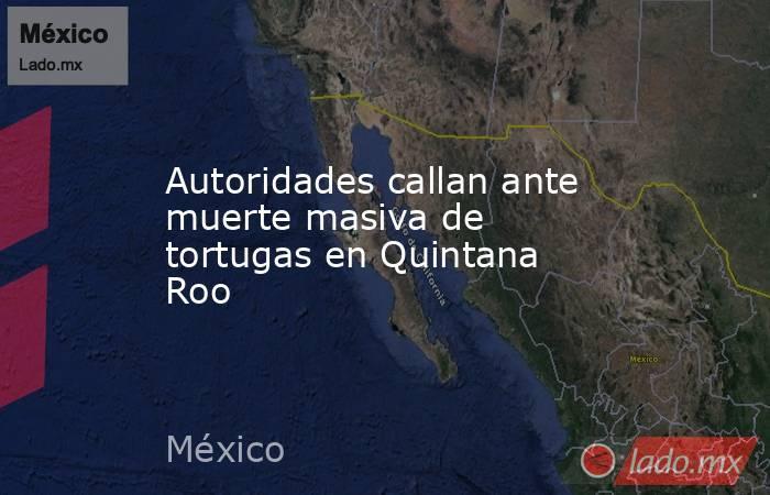 Autoridades callan ante muerte masiva de tortugas en Quintana Roo. Noticias en tiempo real