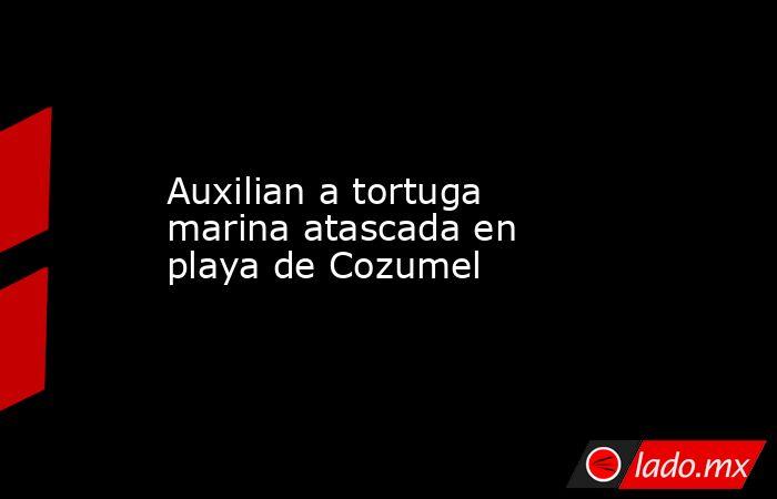 Auxilian a tortuga marina atascada en playa de Cozumel. Noticias en tiempo real