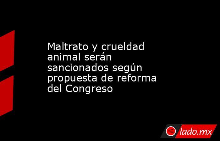 Maltrato y crueldad animal serán sancionados según propuesta de reforma del Congreso. Noticias en tiempo real