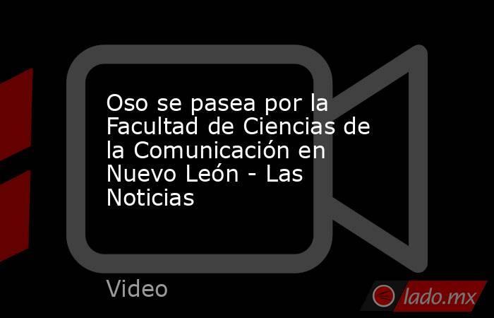 Oso se pasea por la Facultad de Ciencias de la Comunicación en Nuevo León - Las Noticias. Noticias en tiempo real
