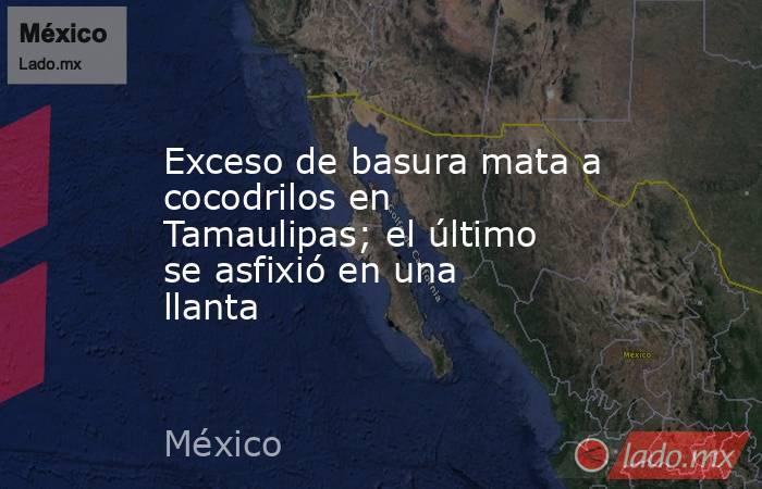 Exceso de basura mata a cocodrilos en Tamaulipas; el último se asfixió en una llanta. Noticias en tiempo real