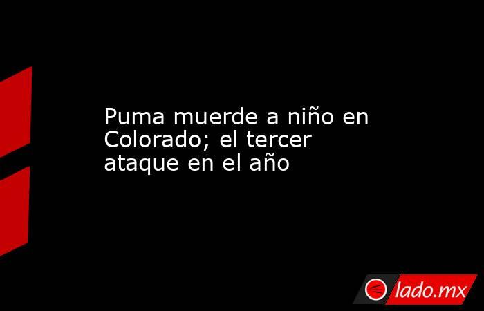 Puma muerde a niño en Colorado; el tercer ataque en el año. Noticias en tiempo real