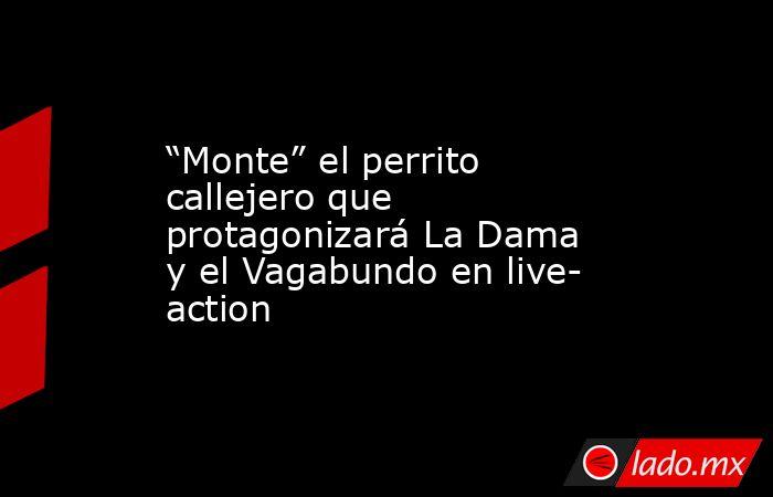 """""""Monte"""" el perrito callejero que protagonizará La Dama y el Vagabundo en live- action. Noticias en tiempo real"""