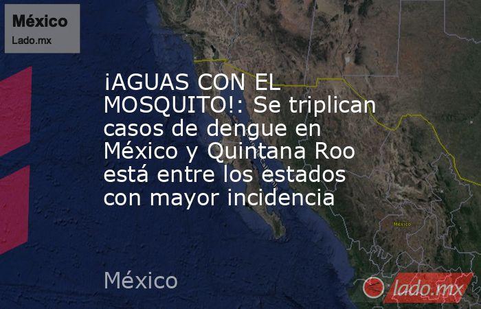 ¡AGUAS CON EL MOSQUITO!: Se triplican casos de dengue en México y Quintana Roo está entre los estados con mayor incidencia. Noticias en tiempo real