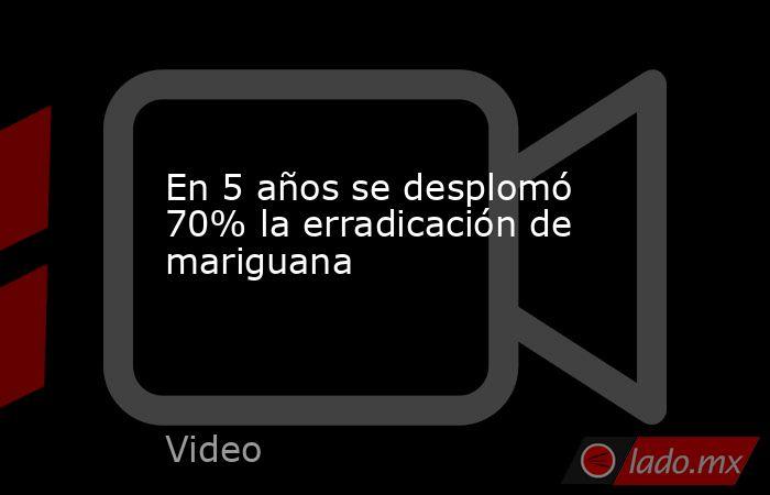 En 5 años se desplomó 70% la erradicación de mariguana. Noticias en tiempo real