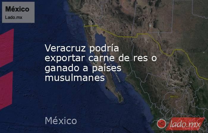 Veracruz podría exportar carne de res o ganado a países musulmanes. Noticias en tiempo real