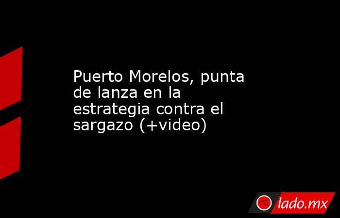 Puerto Morelos, punta de lanza en la estrategia contra el sargazo (+video). Noticias en tiempo real