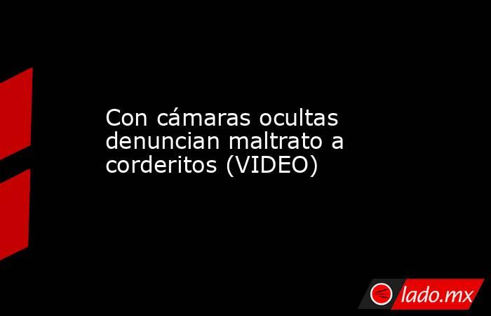 Con cámaras ocultas denuncian maltrato a corderitos (VIDEO) . Noticias en tiempo real