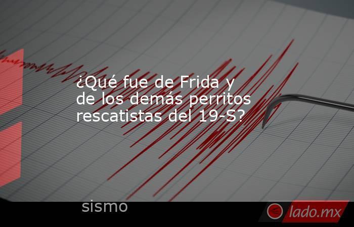 ¿Qué fue de Frida y de los demás perritos rescatistas del 19-S? . Noticias en tiempo real