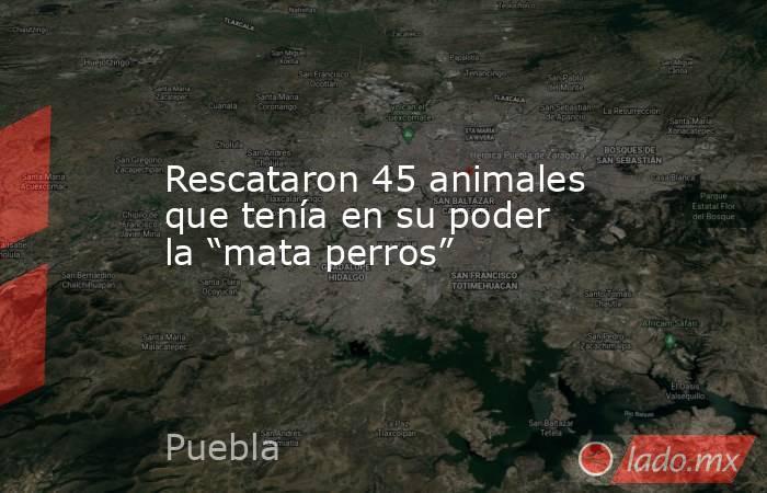 """Rescataron 45 animales que tenía en su poder la """"mata perros"""". Noticias en tiempo real"""