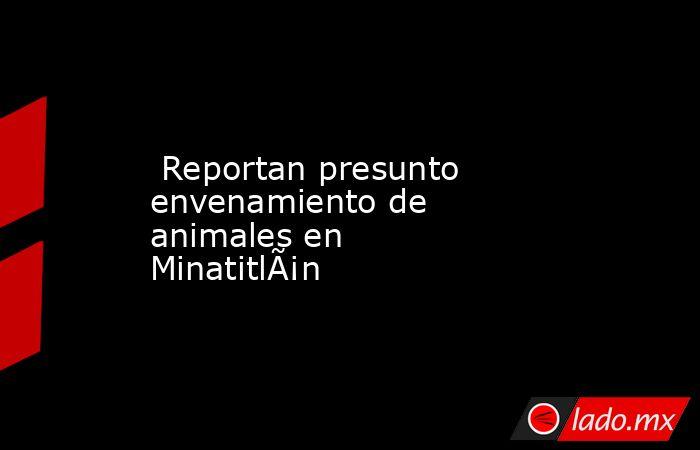 Reportan presunto envenamiento de animales en Minatitlán. Noticias en tiempo real