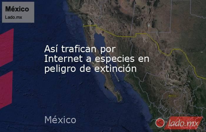 Así trafican por Internet a especies en peligro de extinción. Noticias en tiempo real