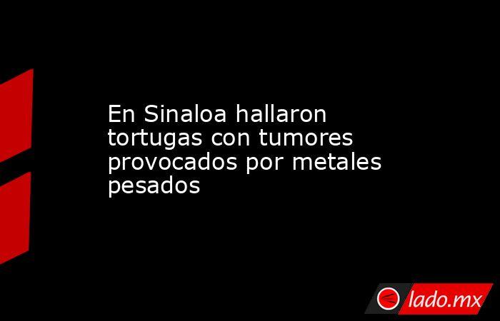 En Sinaloa hallaron tortugas con tumores provocados por metales pesados. Noticias en tiempo real