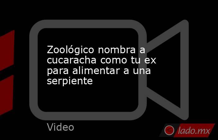Zoológico nombra a cucaracha como tu ex para alimentar a una serpiente. Noticias en tiempo real