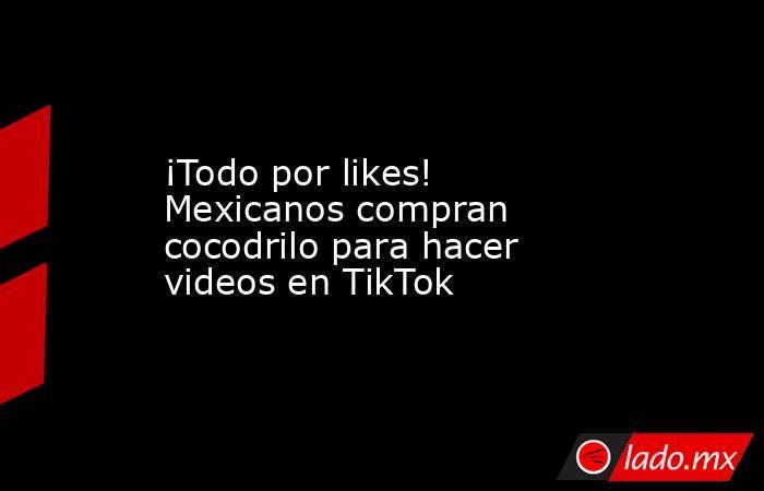 ¡Todo por likes! Mexicanos compran cocodrilo para hacer videos en TikTok. Noticias en tiempo real