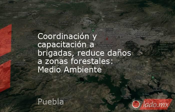 Coordinación y capacitación a brigadas, reduce daños a zonas forestales: Medio Ambiente. Noticias en tiempo real