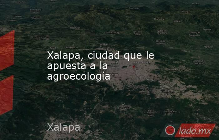 Xalapa, ciudad que le apuesta a la agroecología. Noticias en tiempo real