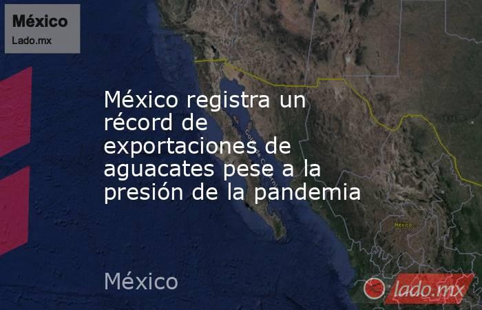 México registra un récord de exportaciones de aguacates pese a la presión de la pandemia. Noticias en tiempo real