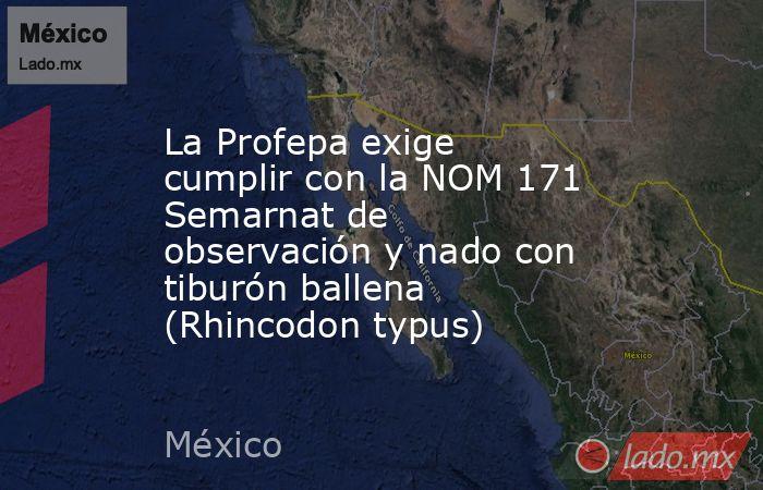 La Profepa exige cumplir con la NOM 171 Semarnat de observación y nado con tiburón ballena (Rhincodon typus). Noticias en tiempo real