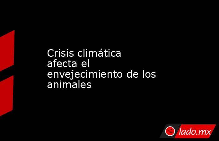 Crisis climática afecta el envejecimiento de los animales. Noticias en tiempo real