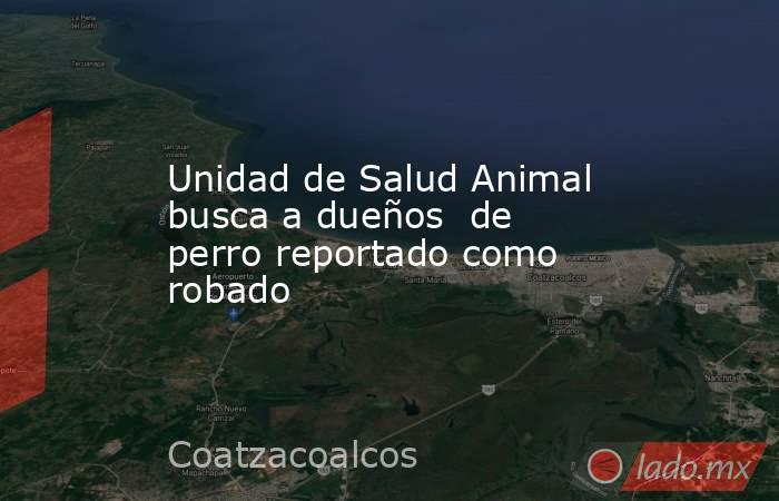 Unidad de Salud Animal busca a dueños  de perro reportado como robado. Noticias en tiempo real