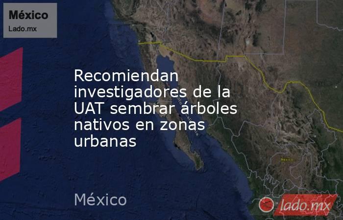 Recomiendan investigadores de la UAT sembrar árboles nativos en zonas urbanas. Noticias en tiempo real