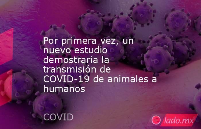Por primera vez, un nuevo estudio demostraría la transmisión de COVID-19 de animales a humanos. Noticias en tiempo real