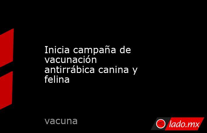 Inicia campaña de vacunación antirrábica canina y felina. Noticias en tiempo real