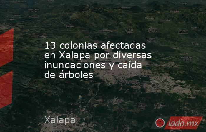 13 colonias afectadas en Xalapa por diversas inundaciones y caída de árboles. Noticias en tiempo real