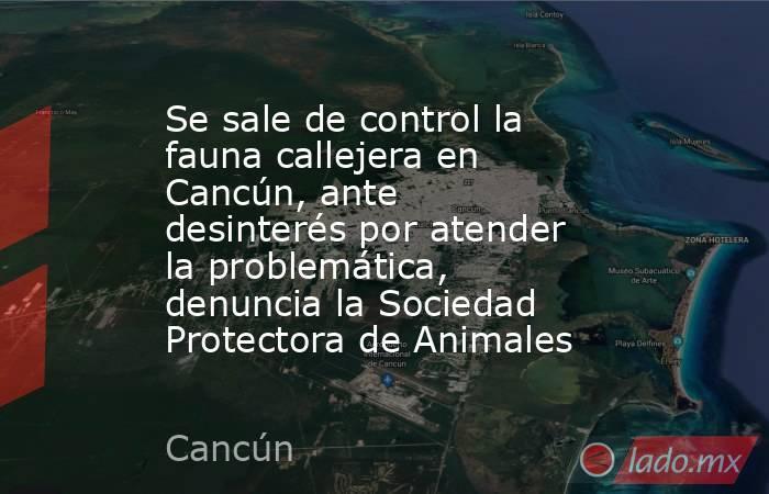 Se sale de control la fauna callejera en Cancún, ante desinterés por atender la problemática, denuncia la Sociedad Protectora de Animales. Noticias en tiempo real