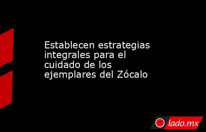 Establecen estrategias integrales para el cuidado de los ejemplares del Zócalo. Noticias en tiempo real