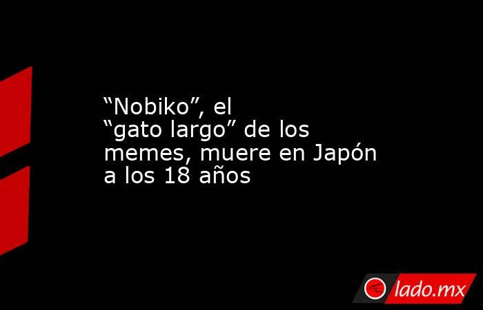"""""""Nobiko"""", el """"gato largo"""" de los memes, muere en Japón a los 18 años. Noticias en tiempo real"""