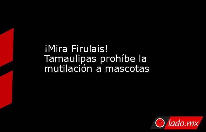 ¡Mira Firulais! Tamaulipas prohíbe la mutilación a mascotas. Noticias en tiempo real