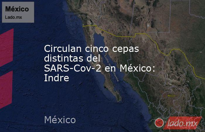 Circulan cinco cepas distintas del SARS-Cov-2 en México: Indre. Noticias en tiempo real