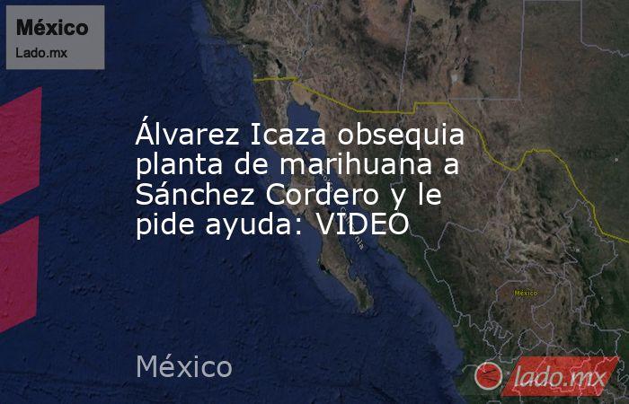 Álvarez Icaza obsequia planta de marihuana a Sánchez Cordero y le pide ayuda: VIDEO. Noticias en tiempo real