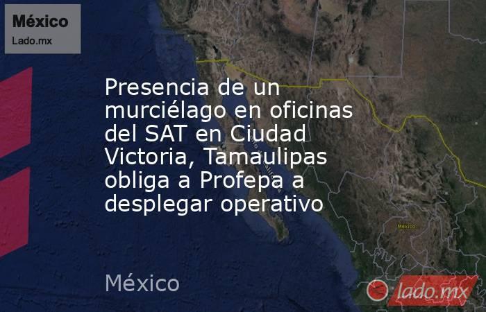 Presencia de un murciélago en oficinas del SAT en Ciudad Victoria, Tamaulipas obliga a Profepa a desplegar operativo. Noticias en tiempo real