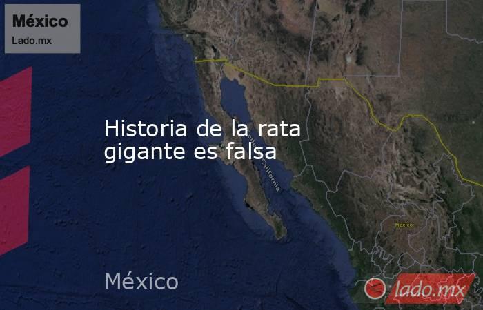 Historia de la rata gigante es falsa. Noticias en tiempo real