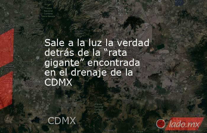 """Sale a la luz la verdad detrás de la """"rata gigante"""" encontrada en el drenaje de la CDMX. Noticias en tiempo real"""