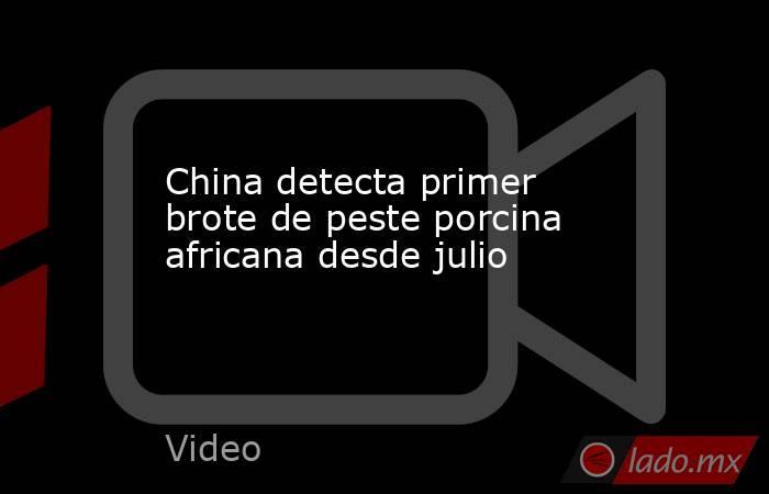 China detecta primer brote de peste porcina africana desde julio. Noticias en tiempo real