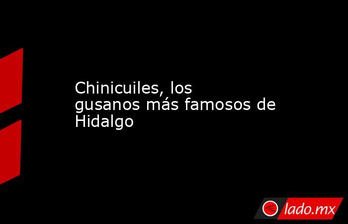 Chinicuiles, los gusanos más famosos de Hidalgo . Noticias en tiempo real