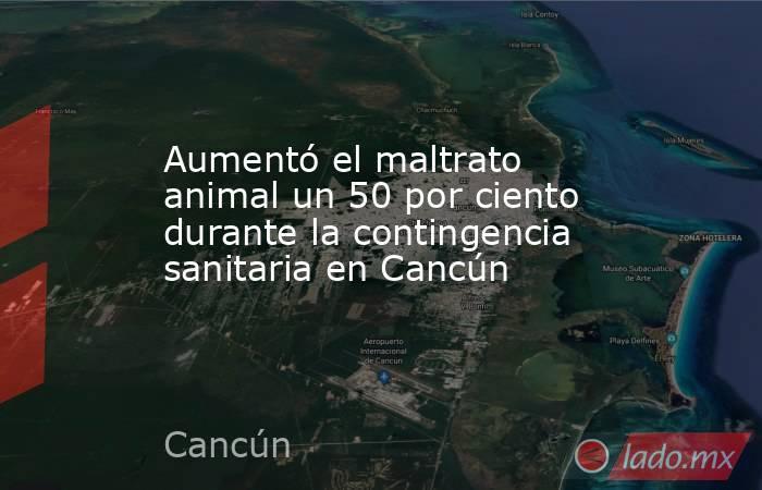 Aumentó el maltrato animal un 50 por ciento durante la contingencia sanitaria en Cancún. Noticias en tiempo real