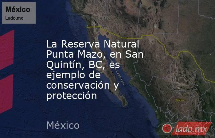 La Reserva Natural Punta Mazo, en San Quintín, BC, es ejemplo de conservación y protección. Noticias en tiempo real