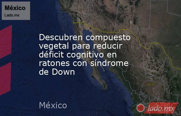 Descubren compuesto vegetal para reducir déficit cognitivo en ratones con síndrome de Down. Noticias en tiempo real