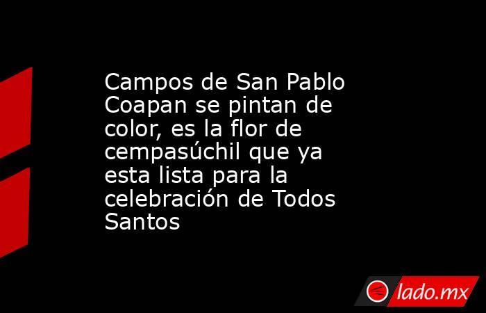 Campos de San Pablo Coapan se pintan de color, es la flor de cempasúchil que ya esta lista para la celebración de Todos Santos. Noticias en tiempo real