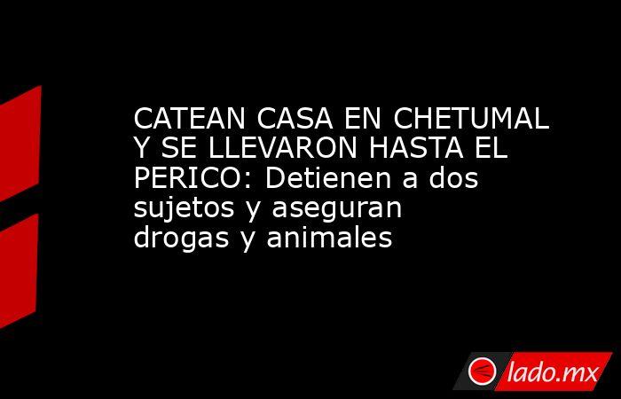 CATEAN CASA EN CHETUMAL Y SE LLEVARON HASTA EL PERICO: Detienen a dos sujetos y aseguran drogas y animales. Noticias en tiempo real