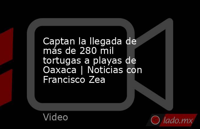Captan la llegada de más de 280 mil tortugas a playas de Oaxaca | Noticias con Francisco Zea. Noticias en tiempo real