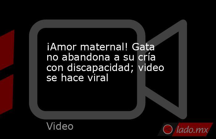 ¡Amor maternal! Gata no abandona a su cría con discapacidad; video se hace viral. Noticias en tiempo real