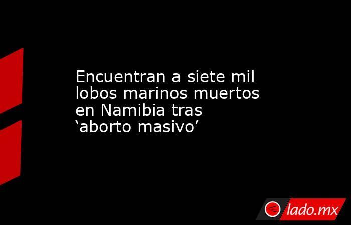 Encuentran a siete mil lobos marinos muertos en Namibia tras 'aborto masivo'. Noticias en tiempo real